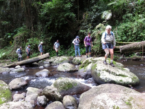 West Canungra Creek, Lamington NP