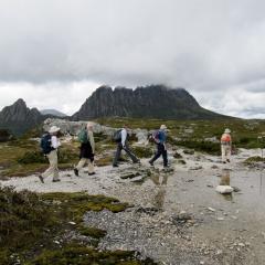 Tassie Tracks: Caves to Cradle